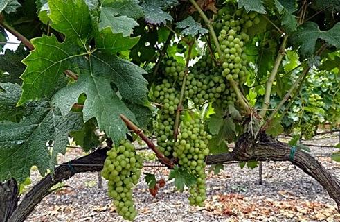 Vilafranca del penedès La Rioja 6878