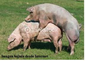 Busco un tio verdaderamente cerdo sumiso 6626
