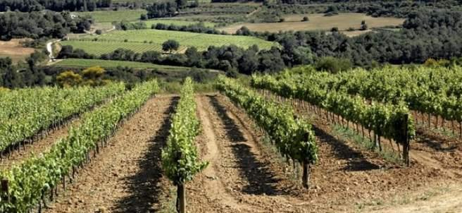 Vilafranca del penedès La Rioja 4756