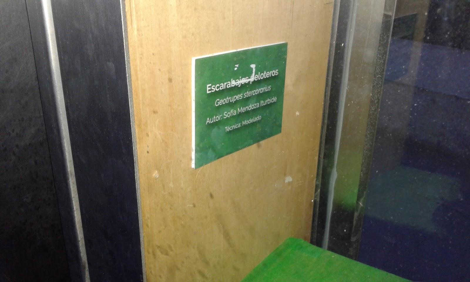 Pasivo tragon en Green Bay sexo 6584