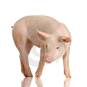 Busco un tio verdaderamente cerdo sumiso 5606