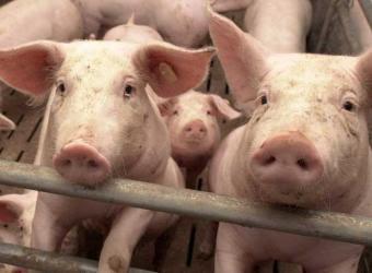 Busco un tio verdaderamente cerdo sumiso 4875