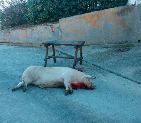 Busco un tio verdaderamente cerdo sumiso 1081