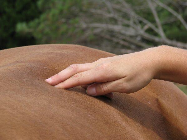 Confía en nuestras manos experiencia un masaje bien hecho ayuda 5612