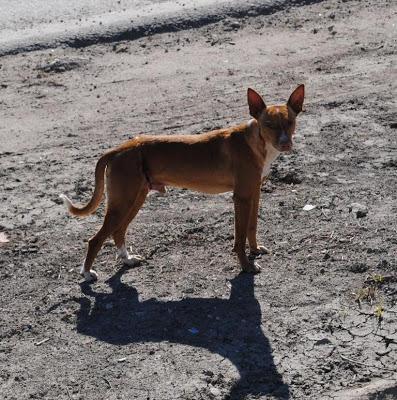 Por ayuda urgente en Villa Centenario 9260
